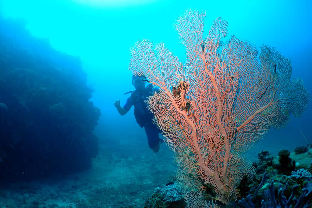 Scuba diving off Tsarabanjina, Madagascar