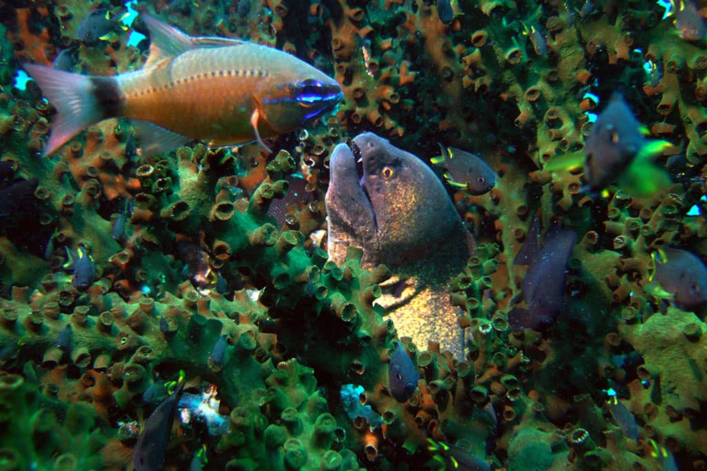 Sea creatures off Tsarabanjina, Madagascar