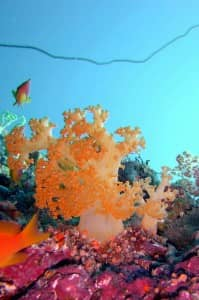 Colourful corals at Moofushi