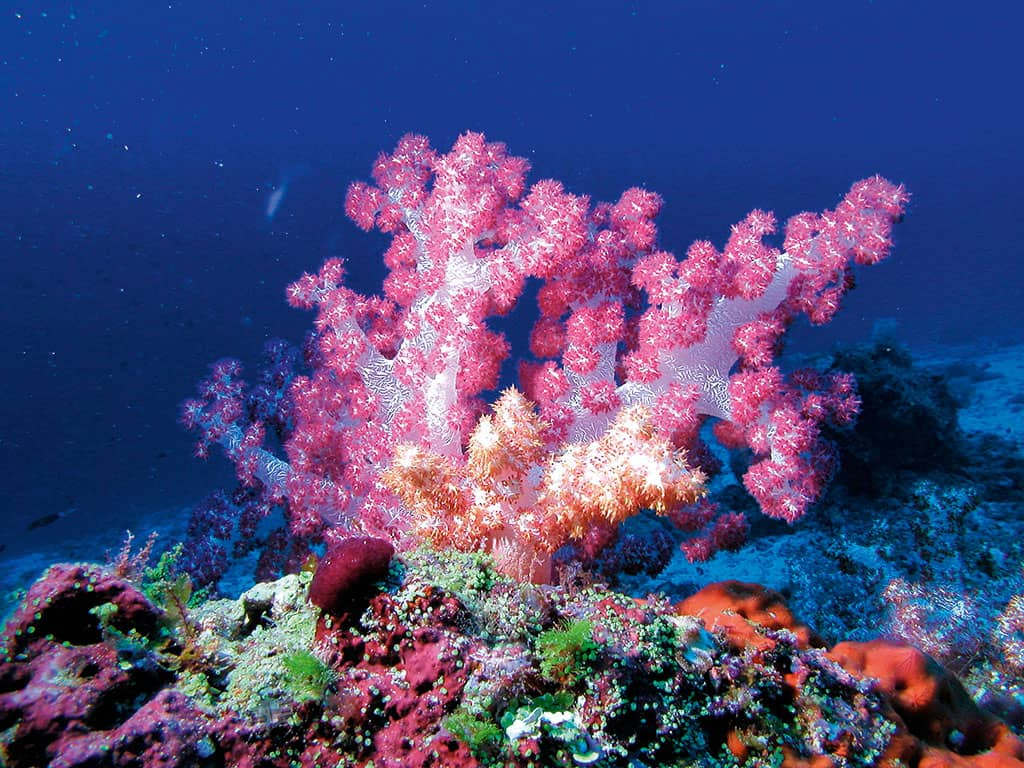 Corals at Constance Moofushi Resort, Maldives