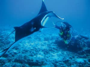 Diving with manta rays at Constance Moofushi