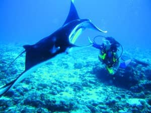 Diving at Constance Moofushi