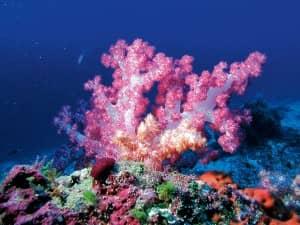 Diving at Constance Moofushi, Maldives