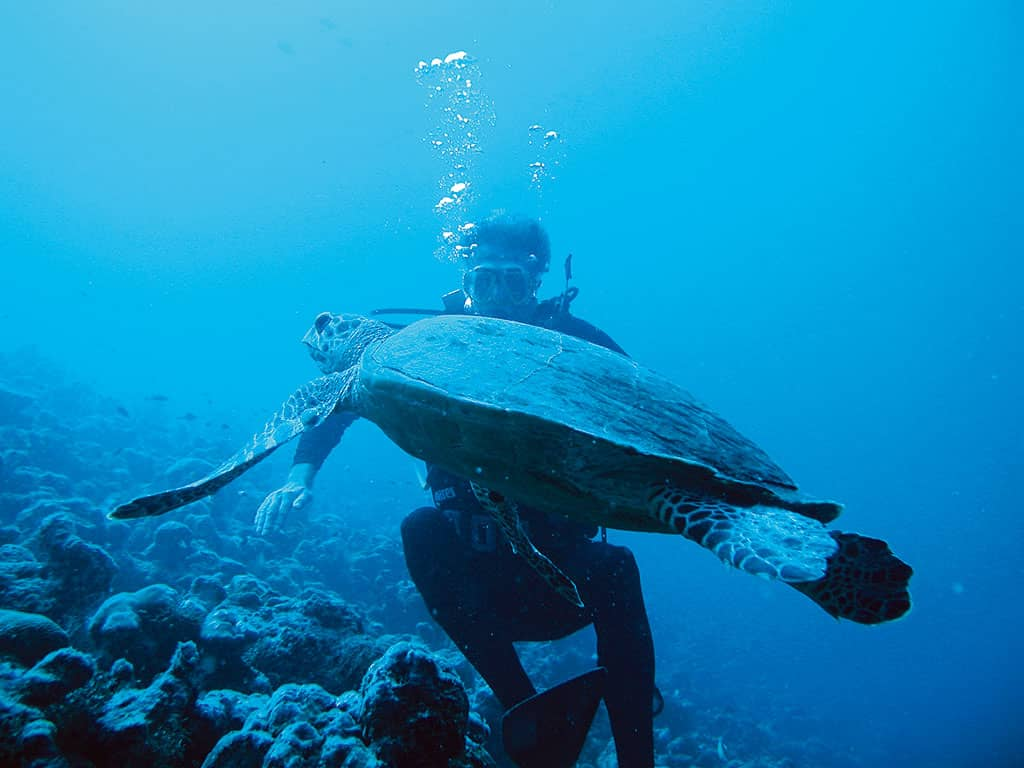 Diving at Constance Moofushi Resort, Maldives