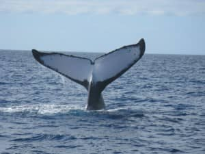 Whale watching at Constance Lodge Tsarabanjina, Madagascar