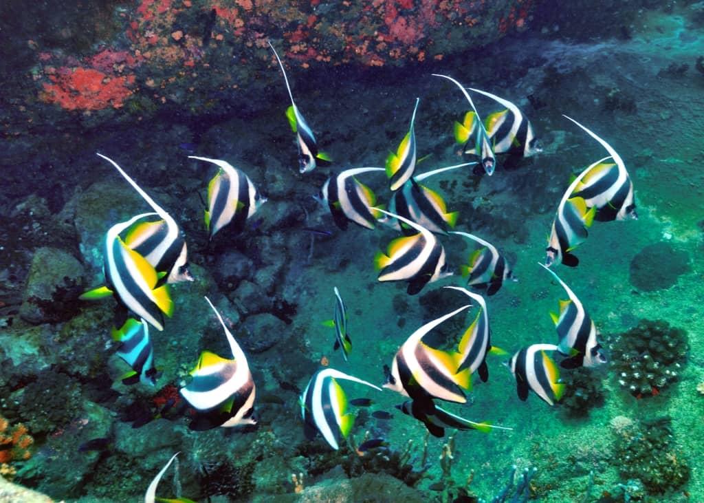 Fish off Constance Lodge Tsarabanjina, Madagascar