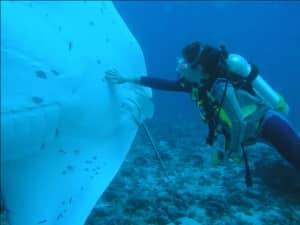 Diving with manta rays in Indian Ocean
