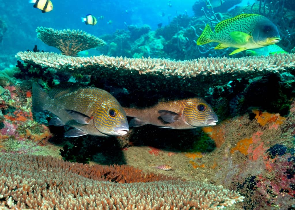 Underwater at Tsarabanjina, Madagascar