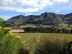 South Africa, wine region