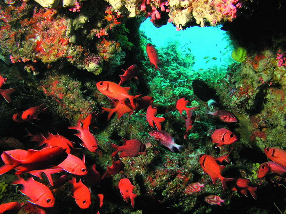 Diving in Indian Ocean with Constance Hotels & Resorts