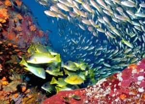 Diving Constance Tsarabanjina, Madagascar