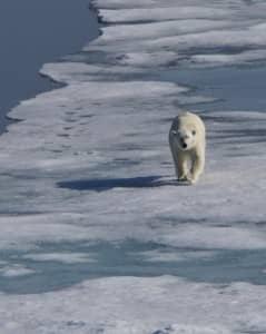 A stroll on the ice