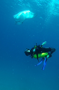 Diving with Manta Rays