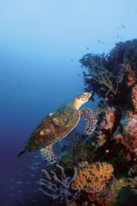 Diving in Madagascar