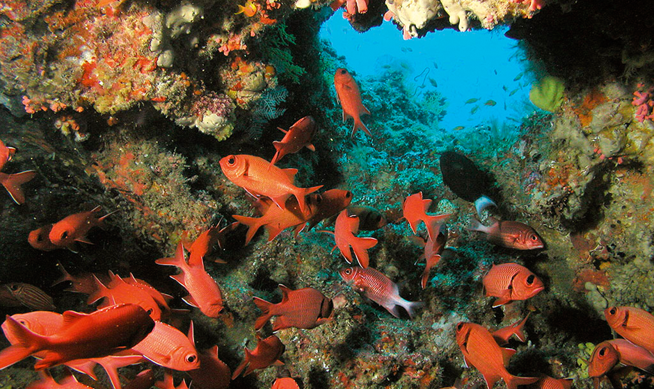 Diving in the Indian Ocean - An explosion of colour