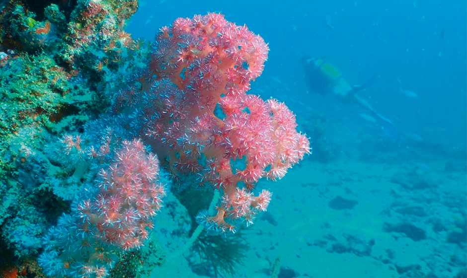 Explore the vibrant reefs