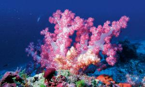 Coral reefs at Constance Moofushi