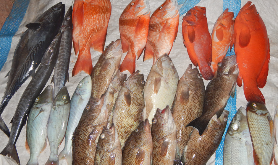 2 ways to cook fish in the seychelles constance hotels blog for Ways to cook fish