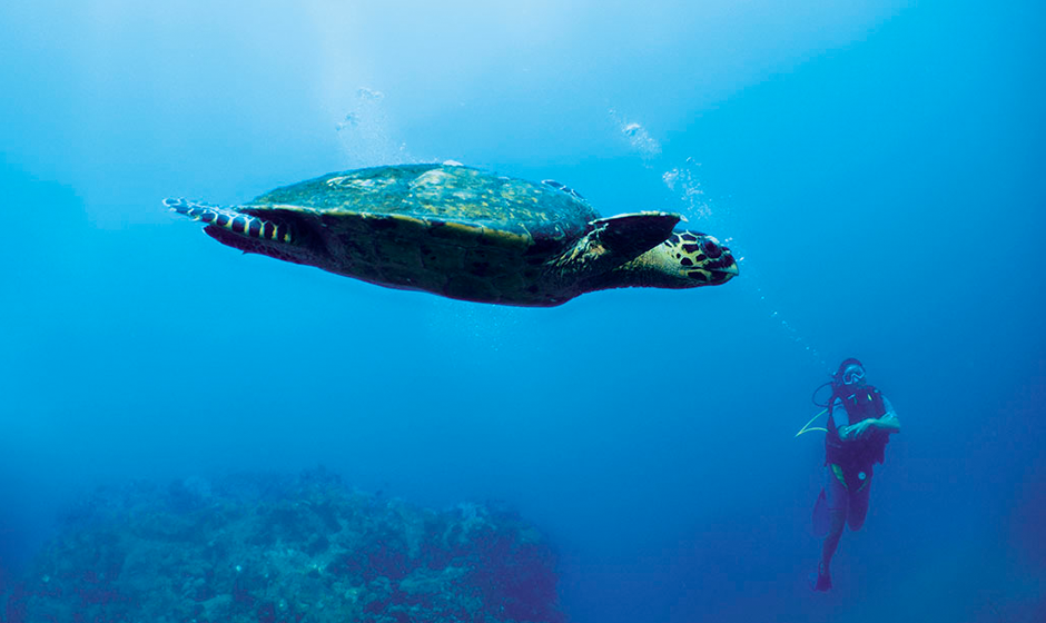 The majestic turtles of the Indian Ocean