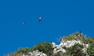 The unique bird life of Madagascar