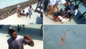 Rescuing the reef shark at Constance Halaveli