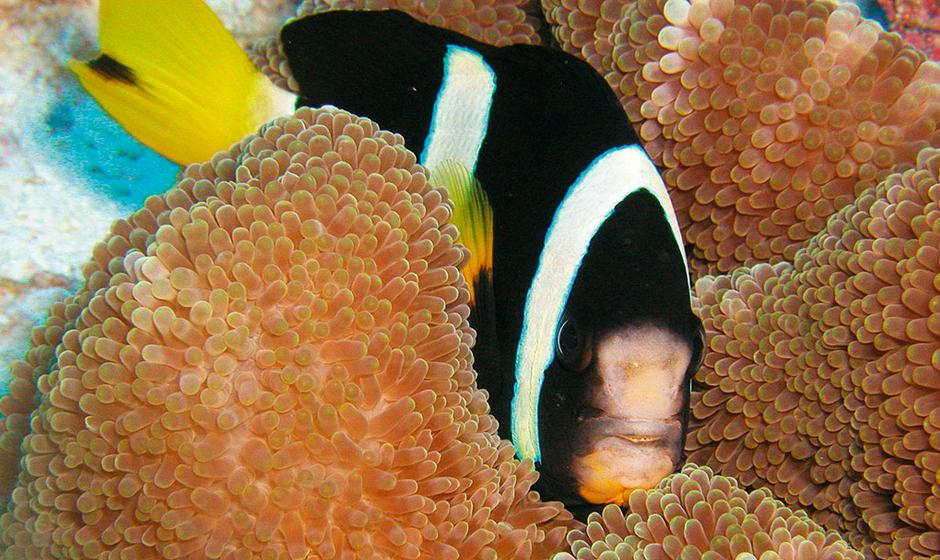 Top dive sites in the Indian Ocean