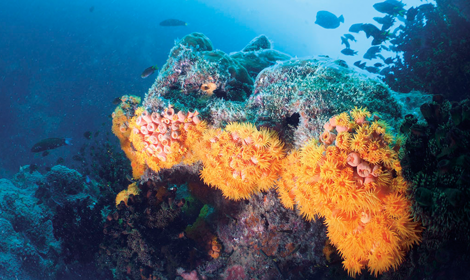 Explore the colourful coral reefs