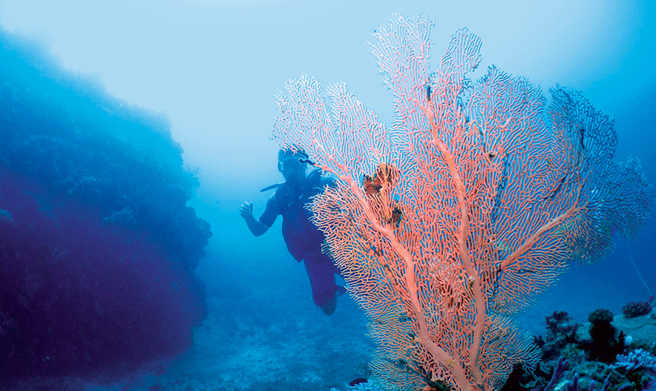 Discover the vibrant colours when scuba diving in the indian ocean
