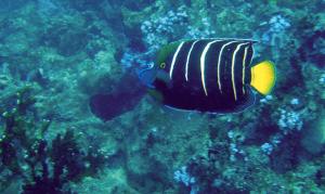 CTM_Diving6
