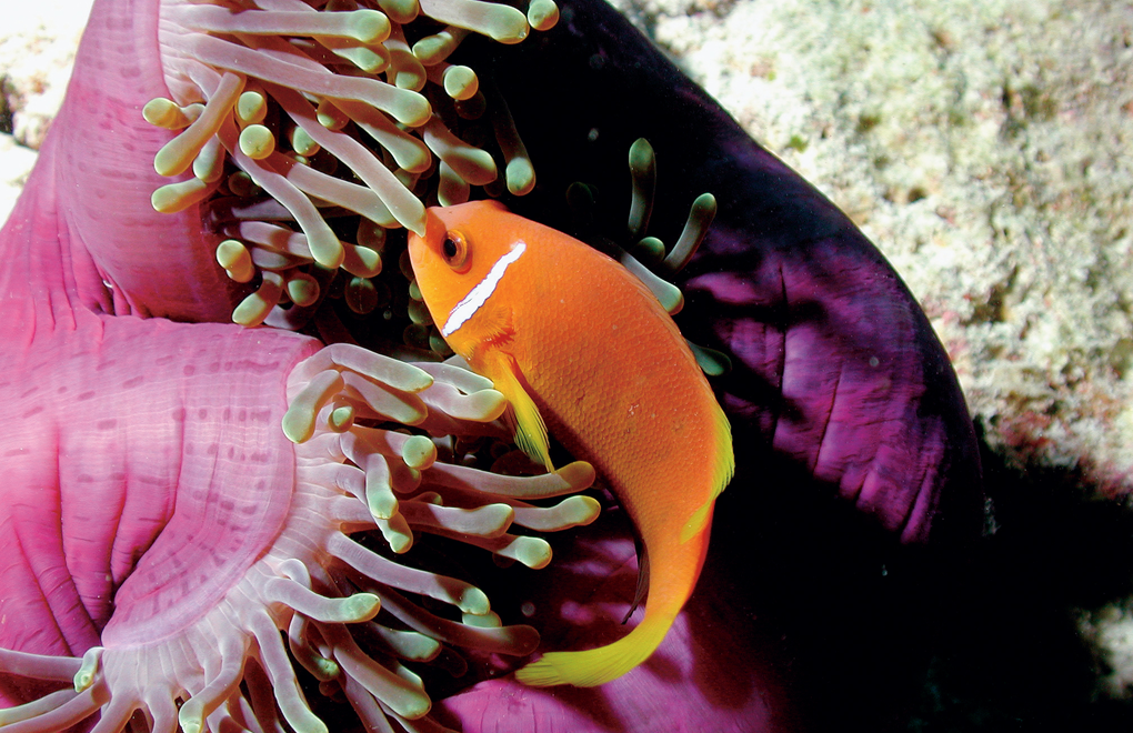 Diving at Constance Tsarabanjina, Madagascar