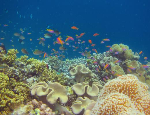 Constance Moofushi's vibrant house reef