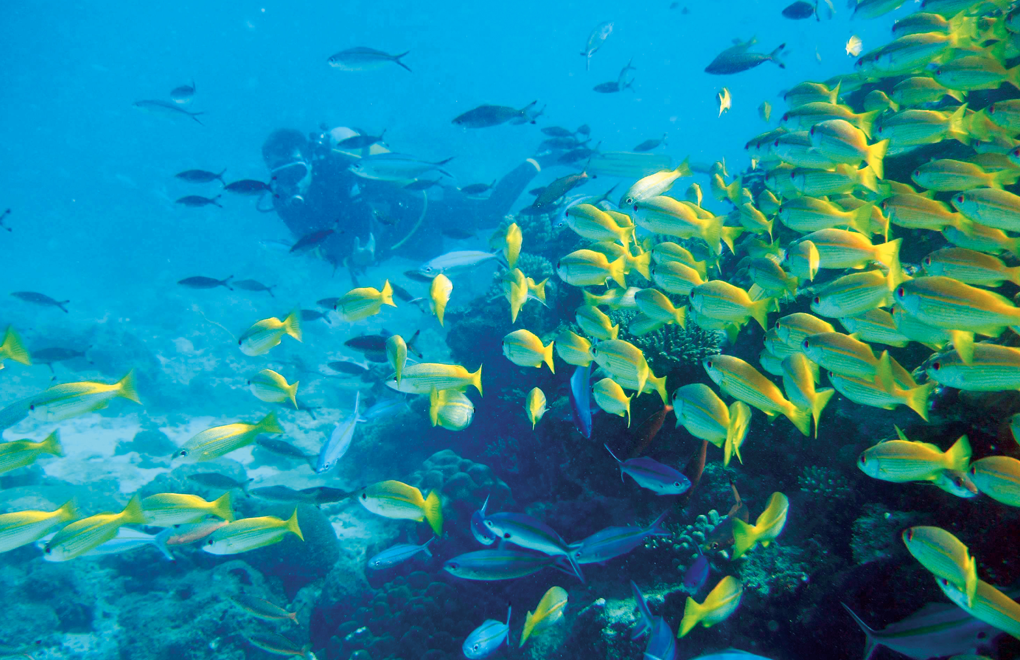 Scuba Diving: top tips to get close to marine life - CHR