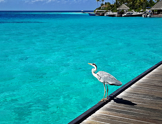 Wildlife at Constance Halaveli, Maldives