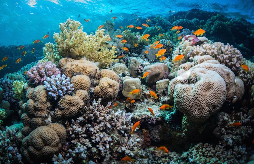 world's best coral reefs