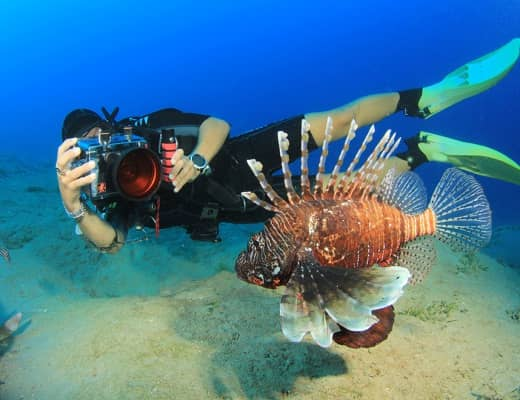 photographing marine behaviour