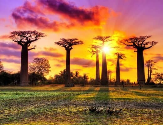 Beautiful Madagascar