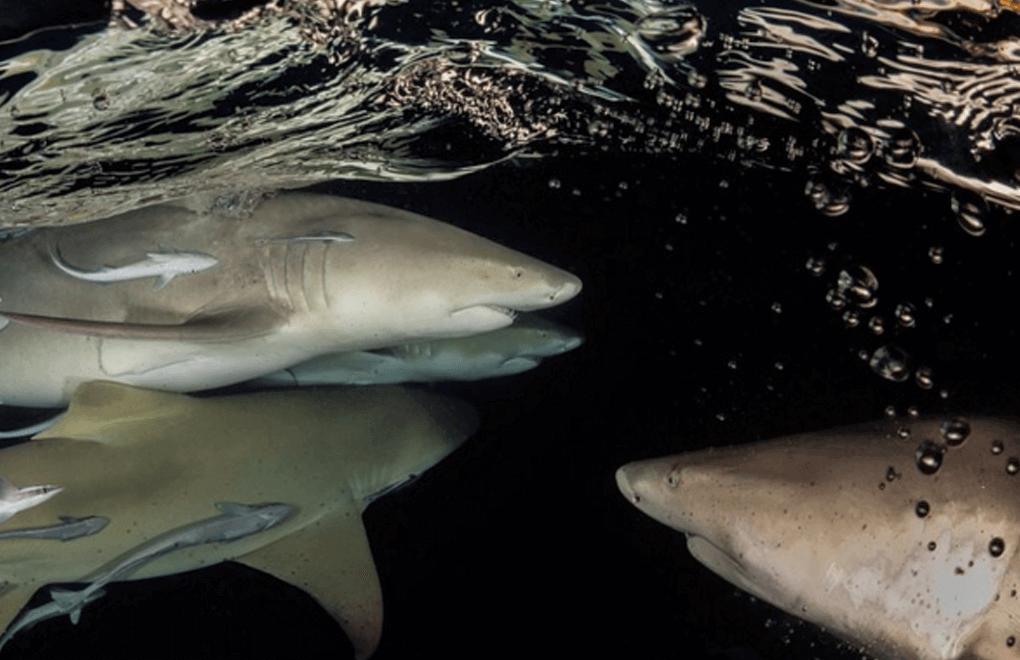scuba diving sharks