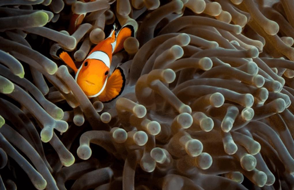scuba diving nemo