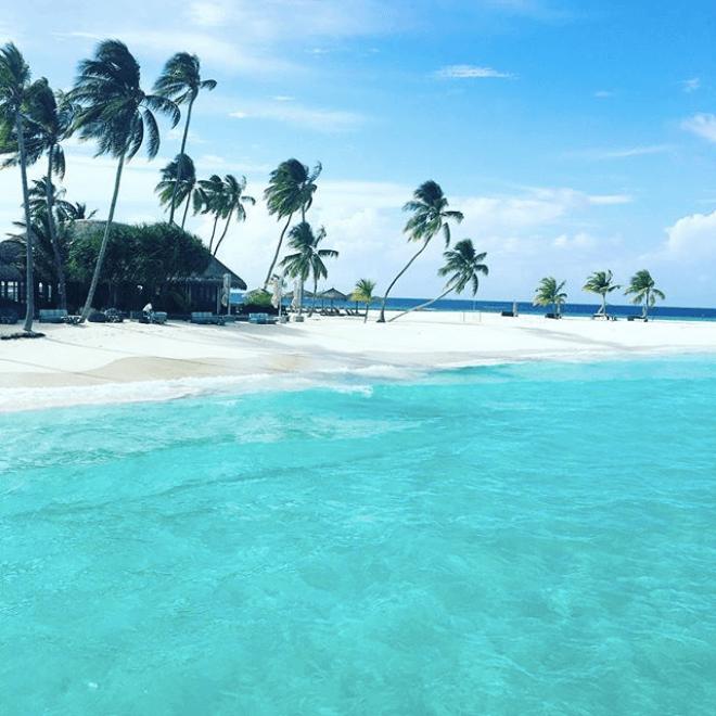 Constance Halaveli palm trees