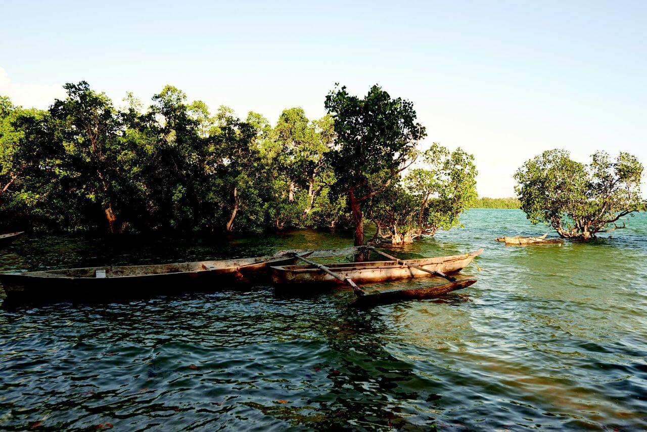 Pemba mangroves