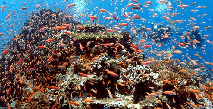 Pemba Zanzibar coral and fish