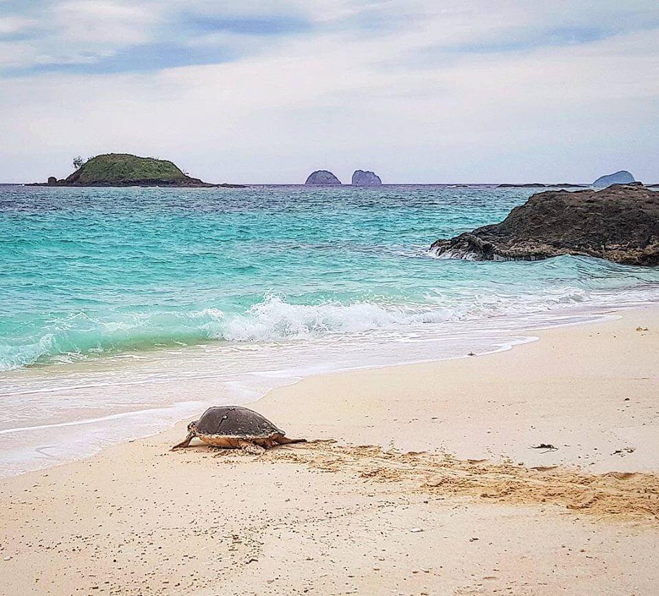 Madagascan turtle