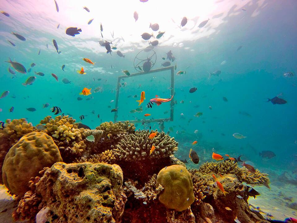 Diving photograph