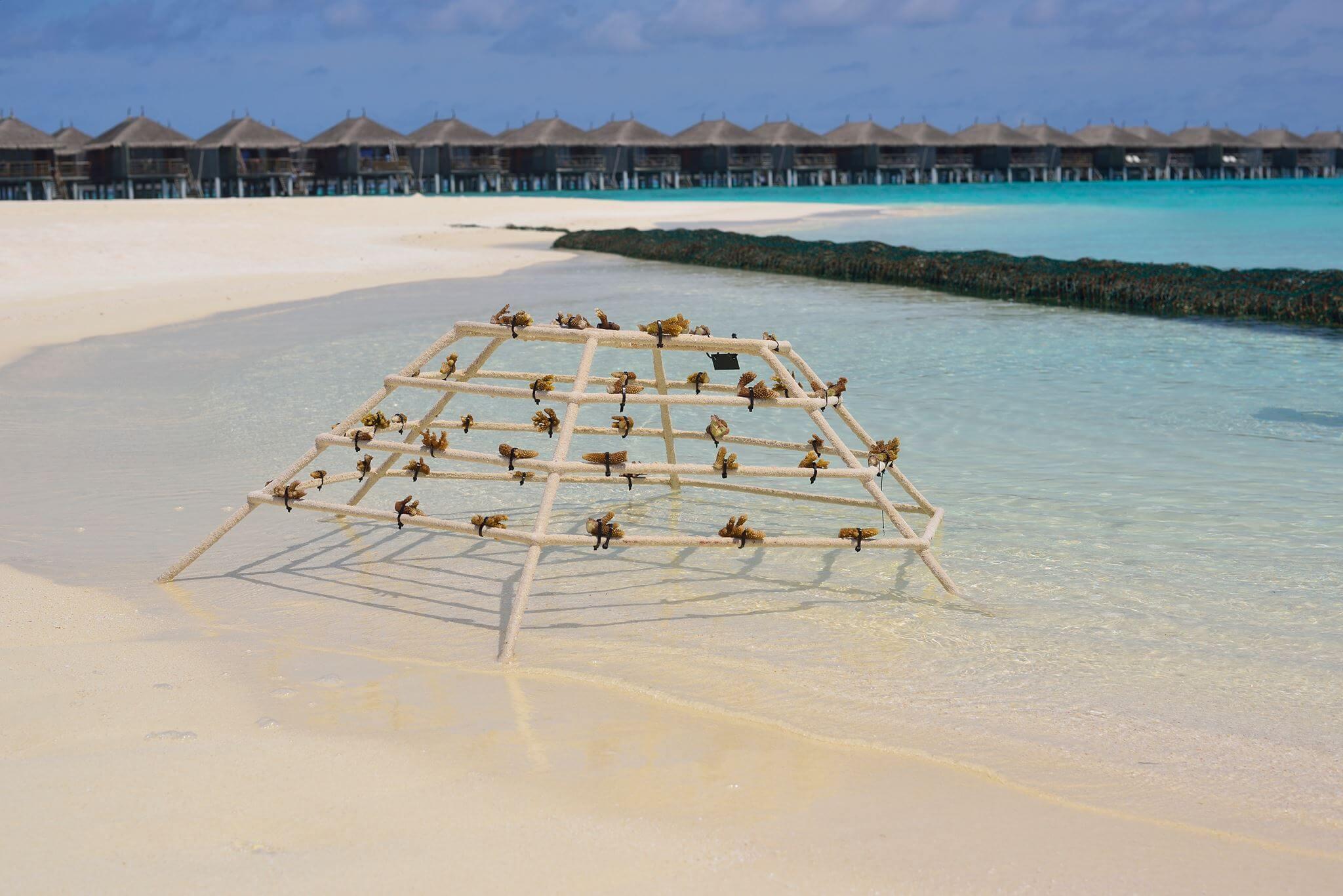 Coral scaper frame at Constance Moofushi Maldives
