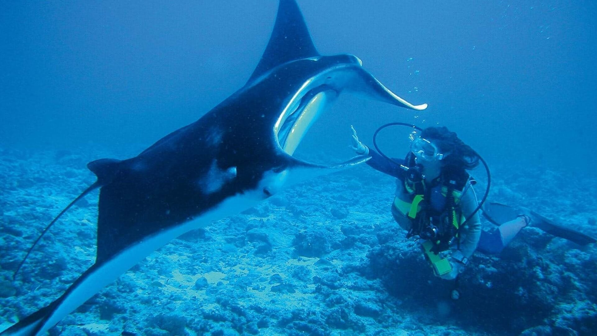 diving manta ray constance moofushi maldives