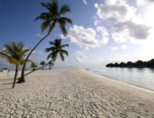 constance halaveli maldives beach palm trees