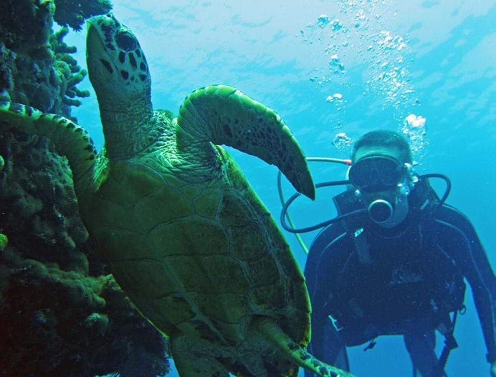 diving-ephelia-seychelles-fesdhoo-wreck